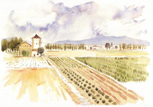 1- Campos Andalucía 1