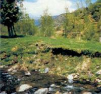 5- Vista de la ribera de un arroyo